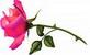 Восьмое марта - праздник женщин