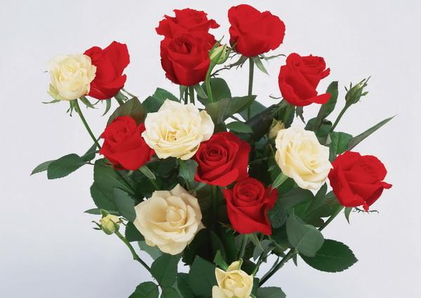 Только цветы в день 8 Марта